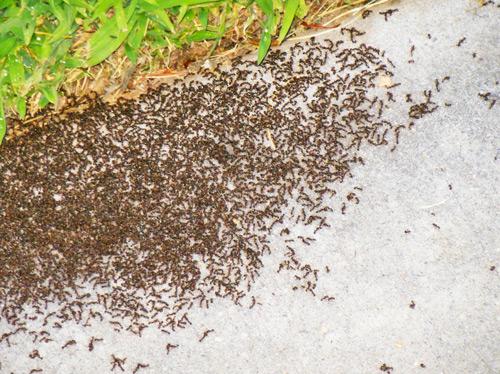 plaga de hormigas en mi comunidad de vecinos