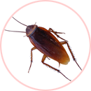 servicio antiplaga cucarachas