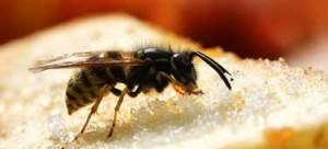 plaga de avispas en casa
