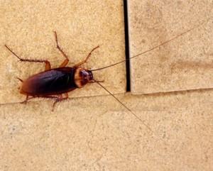 plaga de cucarachas en comunidad de vecinos