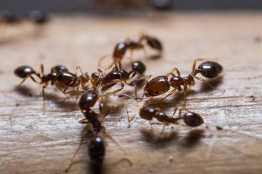 hormigas-en-mi-negocio