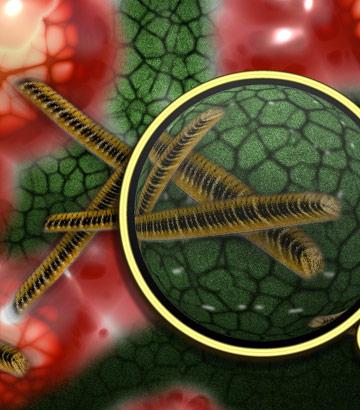 plaga-de-bacterias-virus-y-hongos