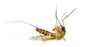 matar mosquitos