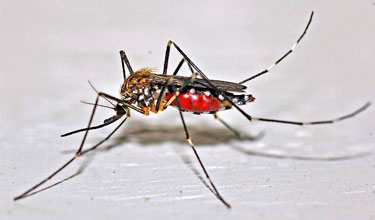 plaga de mosquitos en restaurantes